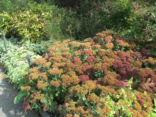 Fall blooms in the Heather Garden